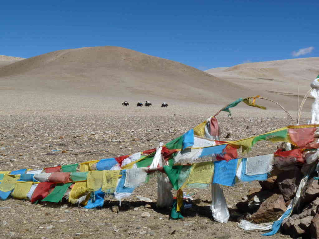 yaks and flags at one of the passes - Tibet
